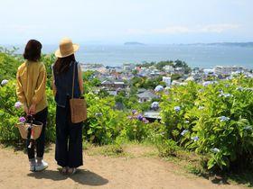 カメラ女子にもお勧め!江の島も見える葉山「あじさい公園」