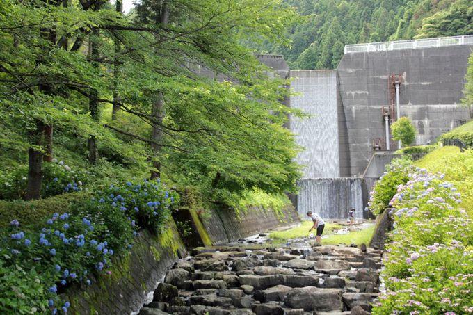 緑濃い風景の中に威容を誇る砂防ダム