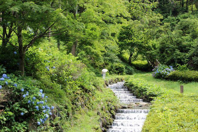 堅苦しい名の印象とは違って、自然溢れる素敵な公園