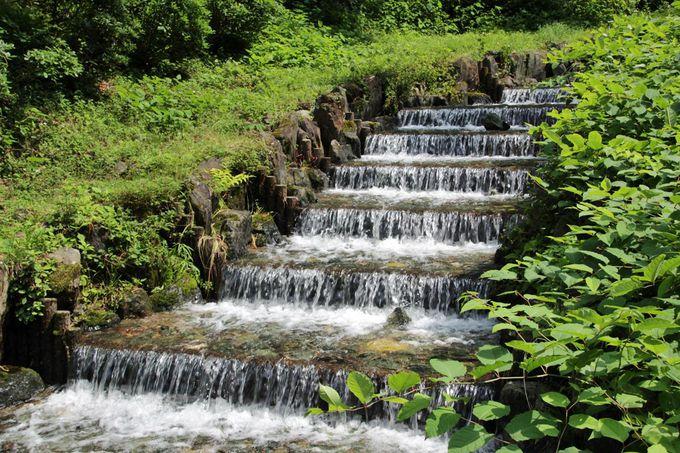雀川源流域の渓流で川遊びを楽しもう!