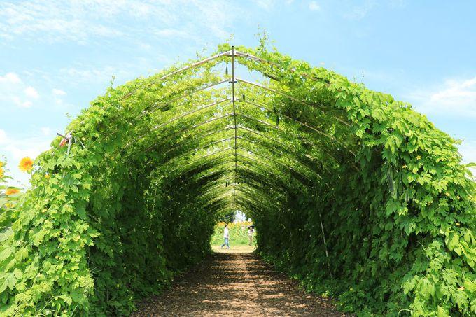 「見晴台」からの眺めも楽しもう!ゴーヤのトンネルや顔出し看板も楽しい!