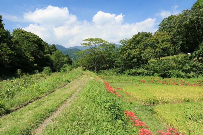 彼岸花の咲く風景の美しさを堪能しつつ、のんびりと歩こう