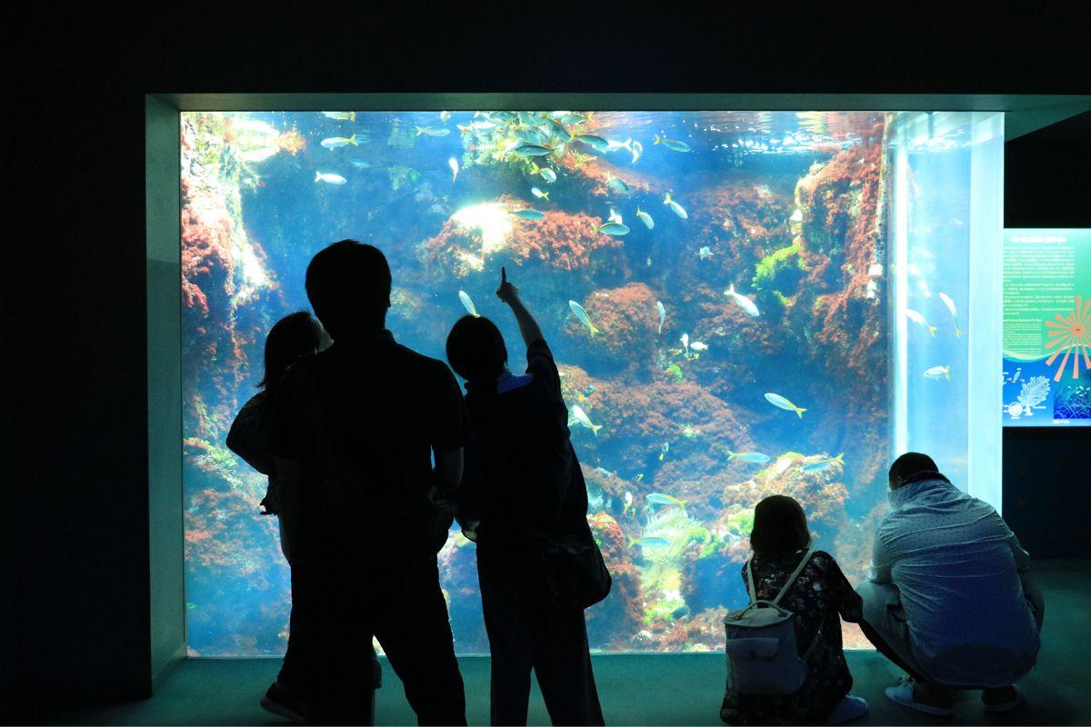 錦江湾の生き物もクラゲもイルカも!