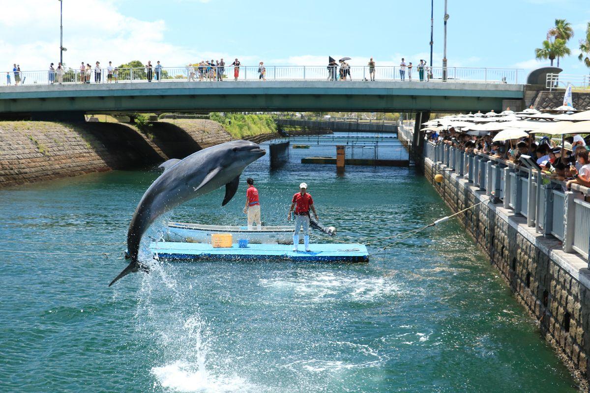 「イルカ水路」で遊ぶイルカの姿は必見
