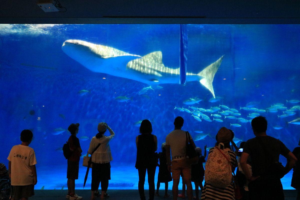 【二日目 午前】「いおワールドかごしま水族館」