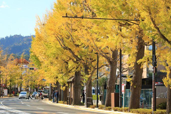 イチョウ並木の甲州街道を歩いて深まる秋を楽しもう!