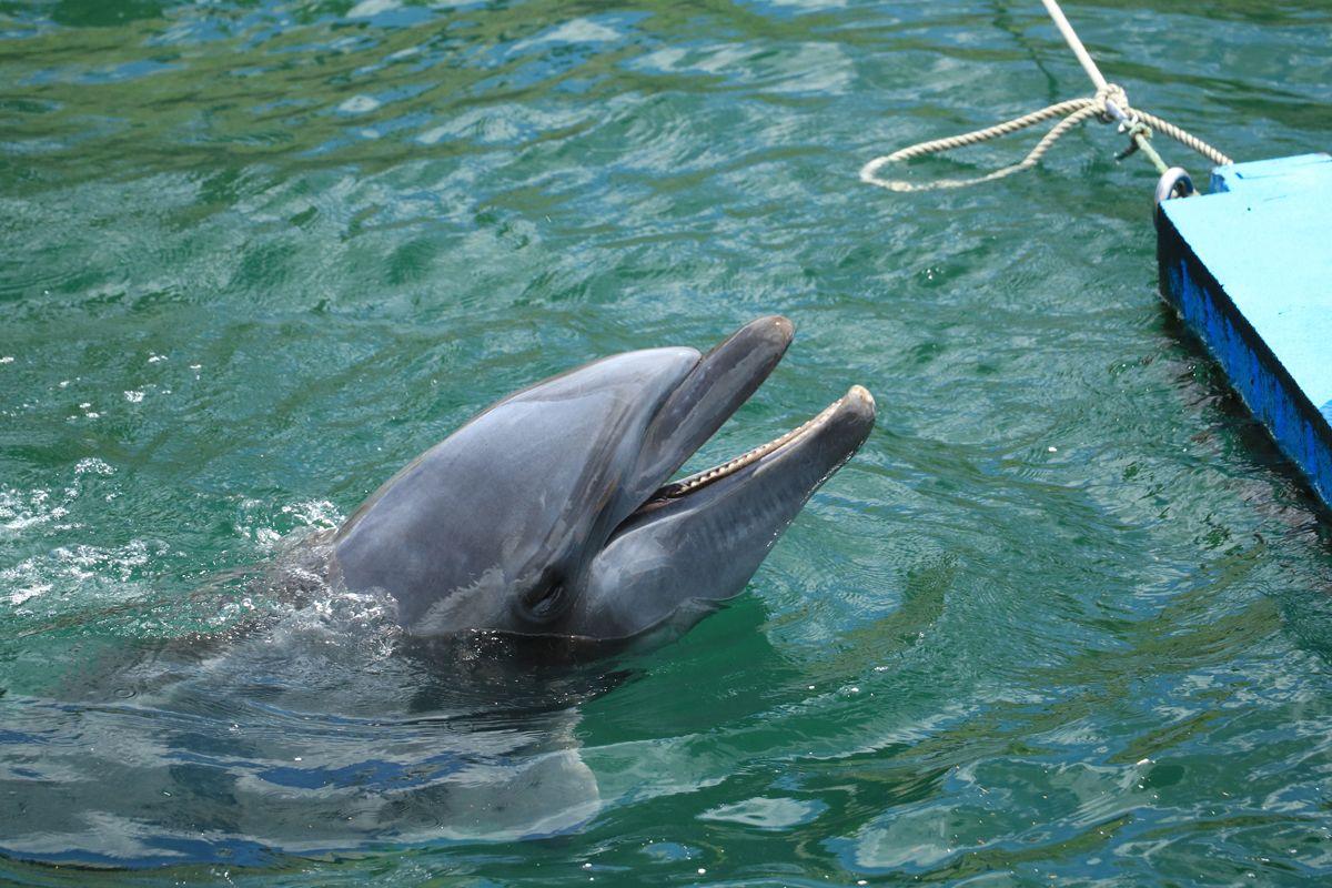 「イルカ水路」で遊ぶイルカたちの姿も見ておきたい!