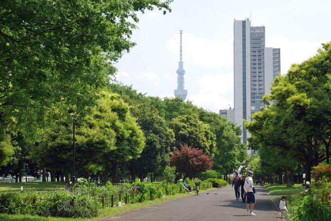 東白鬚公園と隅田川神社を訪ねて「水神の森」に思いを馳せよう