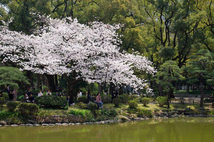 雲形池の岸辺に咲く桜は必見!鶴の噴水とのコラボも素敵!