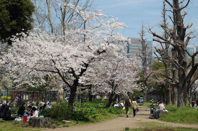 次のお花見シーズンには観光を兼ねて都心へ!