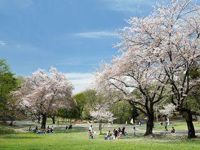 米軍将校の気分で花見!埼玉県「狭山稲荷山公園」は桜の名所