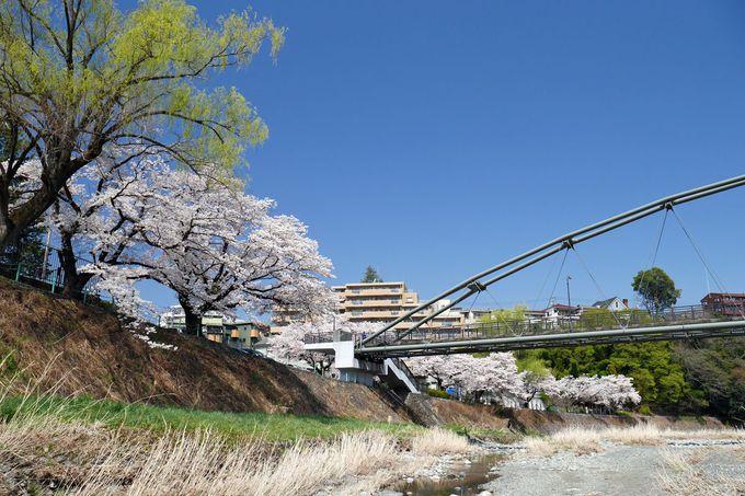 公園西側、柳淵橋周辺の桜も見逃せない!