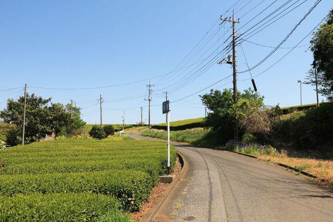 ゆっくりとハイキング感覚で楽しみたい茶畑の風景