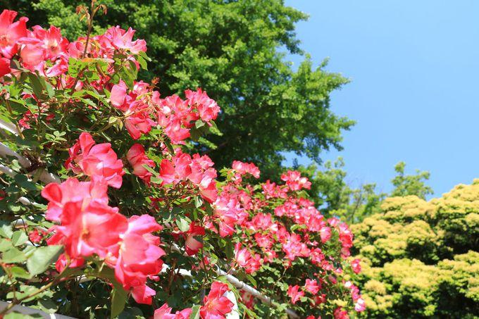さまざまな施設を設けた平塚市総合公園、驚異の充実度