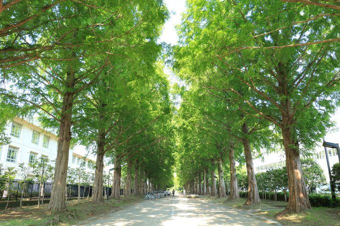 10万本の木々に包まれる!緑濃い園内で散策を楽しもう