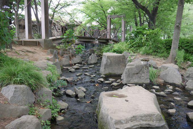 公園内には滝や吊橋が!