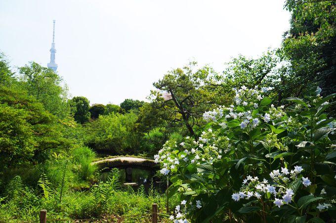 墨田区の向島百花園でスミダノハナビを見よう!