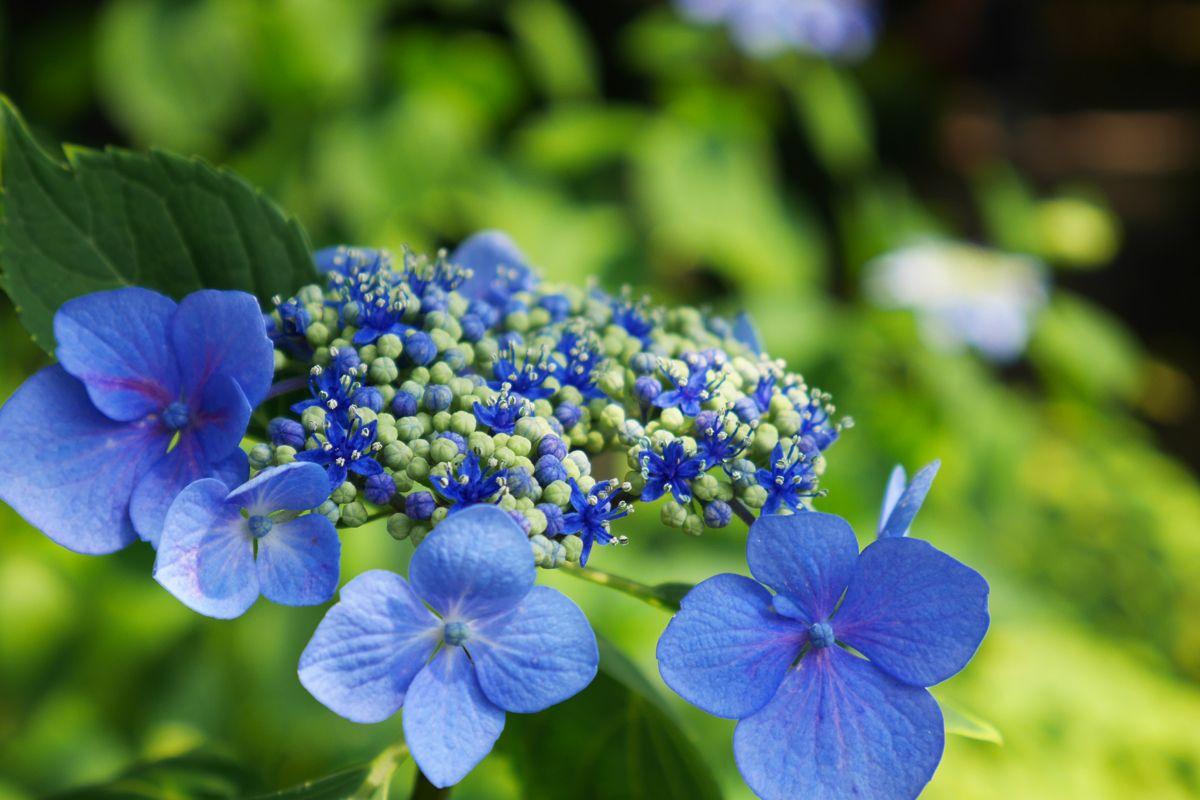 江戸庶民の美意識を感じさせる庭園