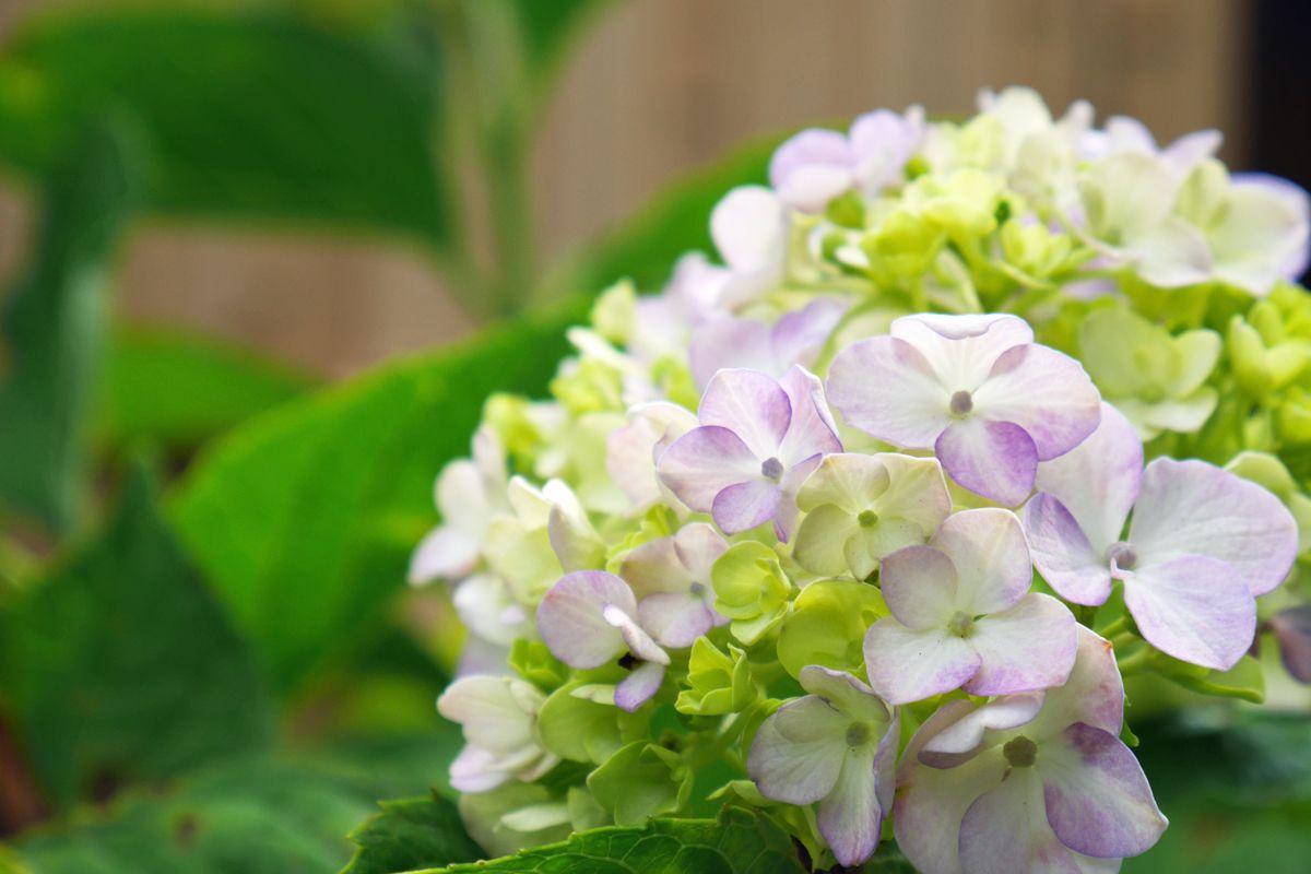 梅雨の花を探しながら庭園の風情を楽しもう!