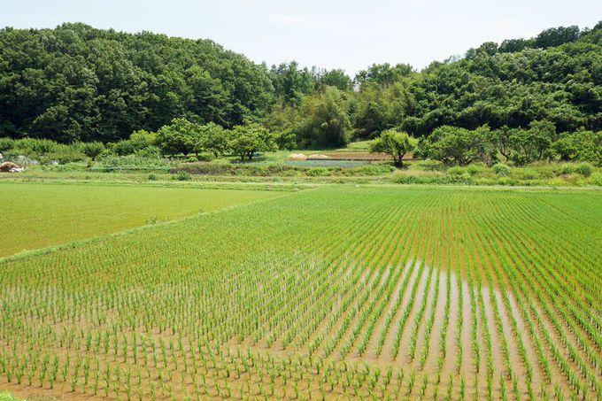 """美しい景色が広がる高野倉で""""稲作の風景""""を見よう!"""