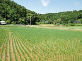 長閑で美しい日本の原風景!埼玉県鳩山町高野倉で田園散歩