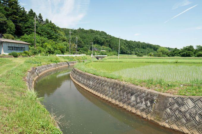 緑の丘と水田が織り成す、高野倉の美しい田園風景