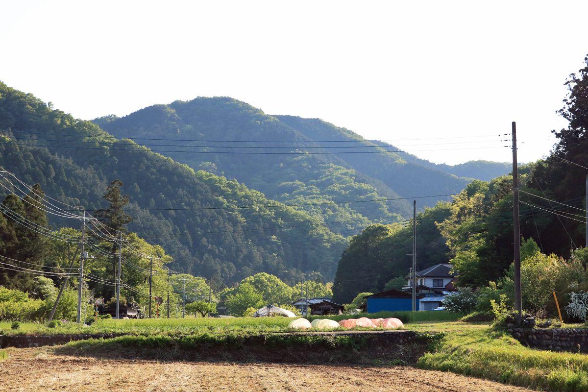 周辺の長閑な田園風景を楽しもう