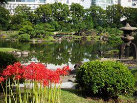 東京の真ん中で彼岸花!初秋の都心で庭園&公園巡りを楽しもう