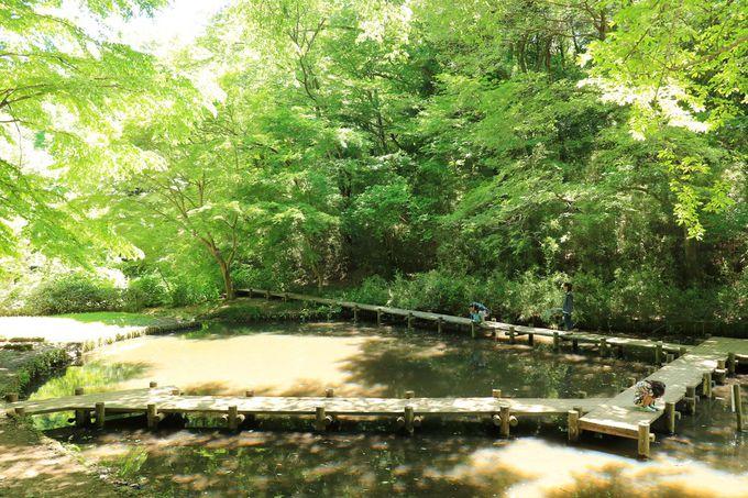 ファミリーでの行楽にも!自然溢れる小山田緑地本園