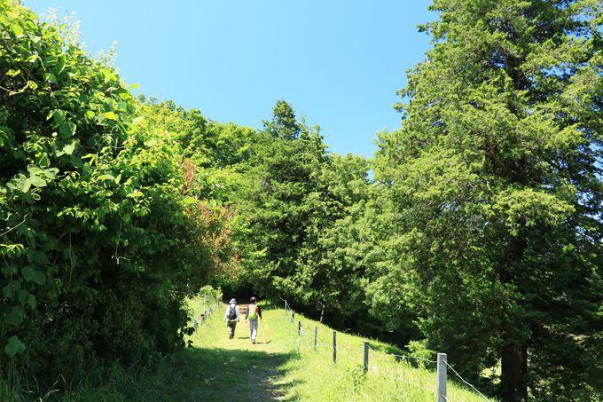 人の営みと共にある自然、多摩丘陵の里山を訪ねよう