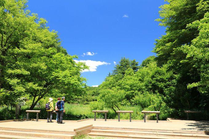 尾根道ハイキングが楽しい「梅木窪分園」