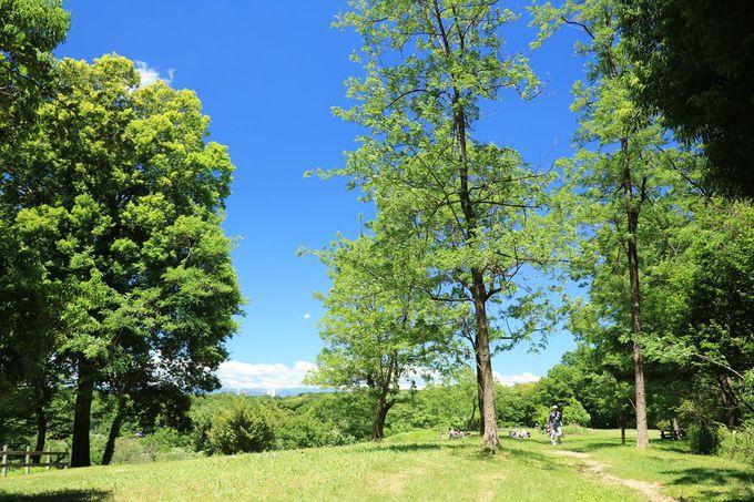 多摩丘陵本来の姿が残る地域に設けられた「小山田緑地」