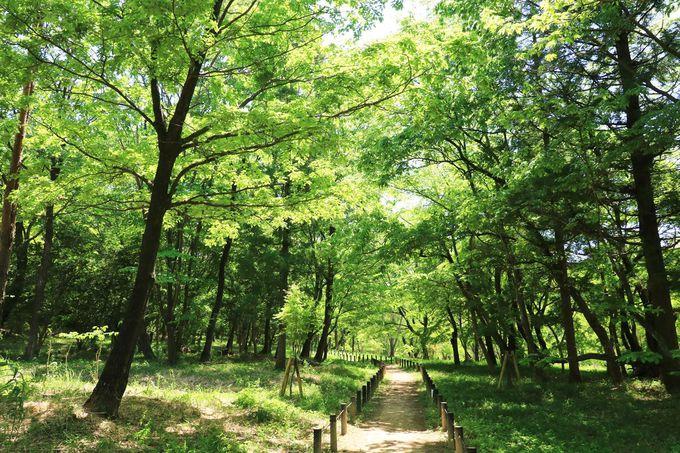 溢れる緑に包まれて樹林散歩!与謝野晶子の歌碑も見ておこう