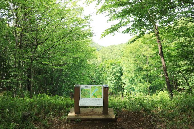 都民・市民の憩いの場、滝山城の遺構を整備した「滝山公園」