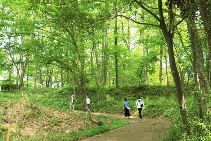 自然溢れる滝山公園、気軽にピクニック感覚で楽しもう