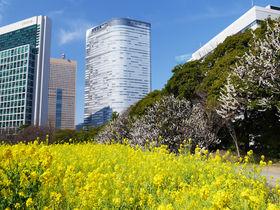 早春の都心散歩!ふたつの大名庭園を巡って観梅を楽しもう