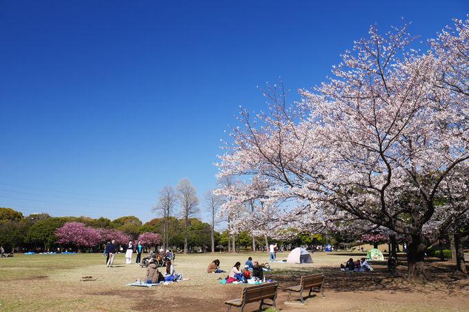 ファミリーに人気の岸根公園、お花見スポットとしてもお勧め