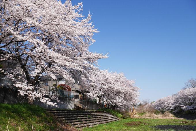 河岸の遊歩道を辿って桜並木を堪能しよう!