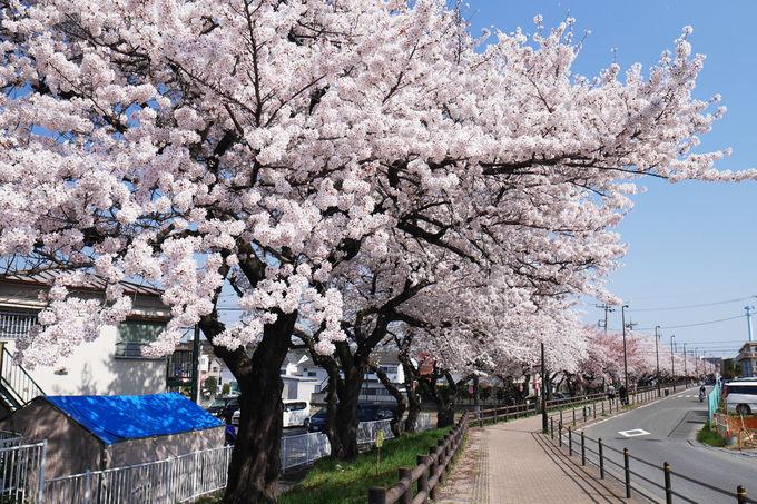 多摩川を渡って福生市へ足を延ばすのもお勧め!
