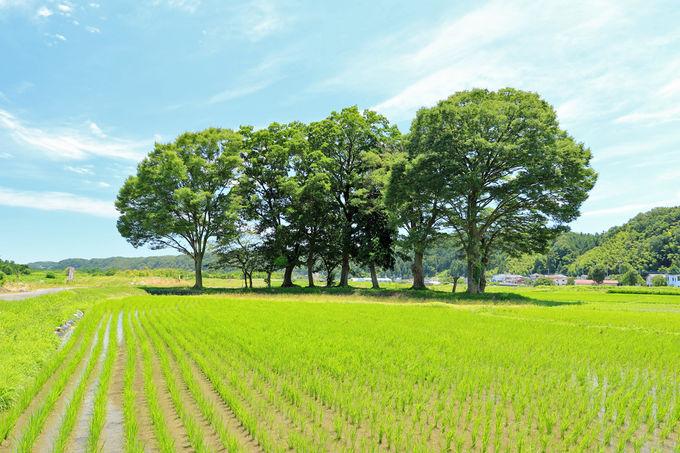 田園風景の見せるさまざまな表情を楽しもう
