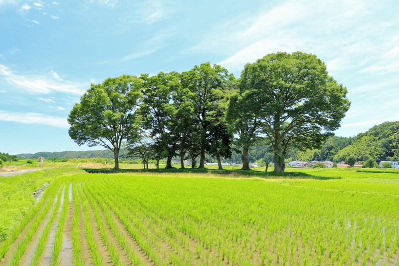 知る人ぞ知る東京の米どころ!八王子市高月町で田園散歩