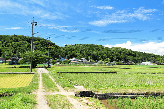 多摩川と加住丘陵に挟まれた高月町の水田地帯