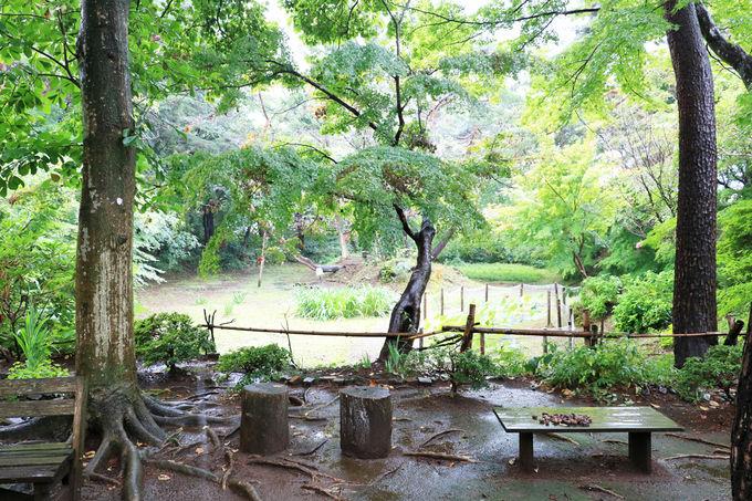 さまざまな種類のモミジが茂る庭園