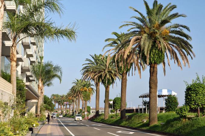 「日本の道百選」のひとつ、「橘公園通り」の景観も美しい