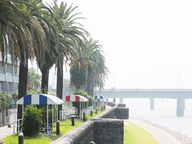 宮崎を象徴する景観!「橘公園」のフェニックス並木が美しい