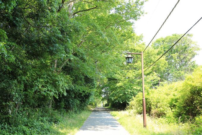 水無月園の横の舗道は日本初の近代水道を通した道
