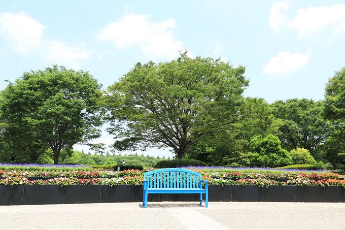 緑に溢れた素晴らしい相模原公園