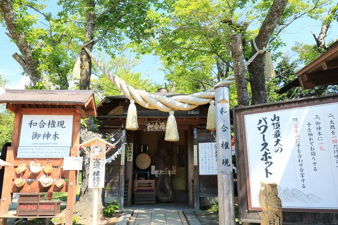 御神木と富士山のパワーを授かろう!