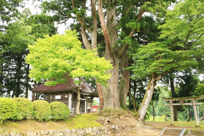 松尾神社のお地蔵様が何とも良いお姿