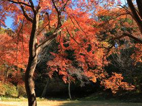 目指すは本丸のモミジ!八王子「都立滝山公園」で秋の城攻め
